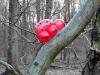 baumkaefer-ballon_artdesign